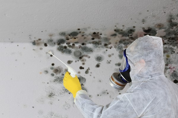 How to Prevent Mold Infestations in Your Home
