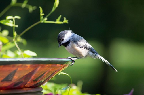 Combine a Planter & a Bird Bath With This DIY Project