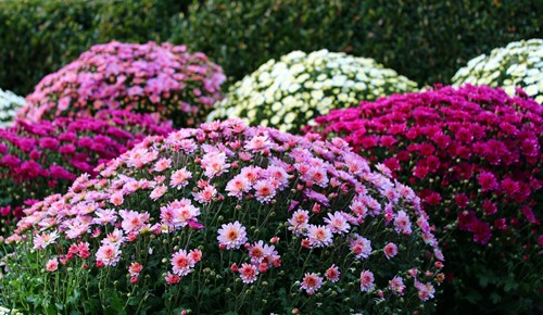 3 Ways to Upgrade Your Front Yard on a Budget