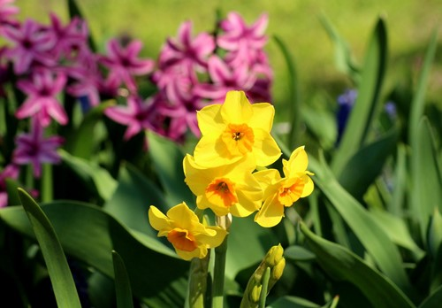 Increase Curb Appeal With These Springtime Flowers