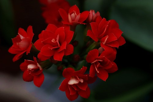 Try These Low-Maintenance Flowering Houseplants