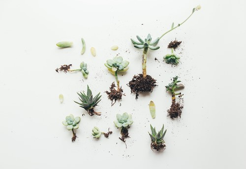 Which Potting Mix Should I Use for My Houseplants?
