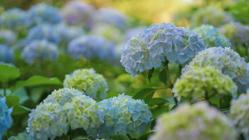 These 3 Shrubs Will Look Beautiful in Front of Your House