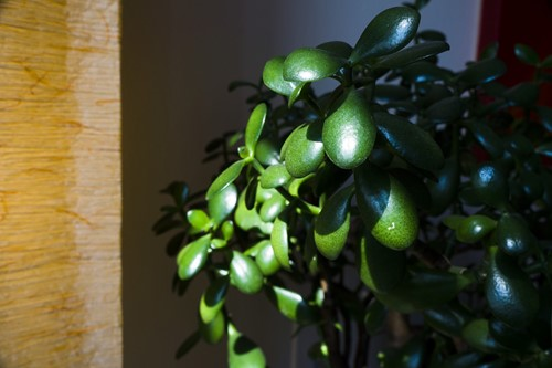 The 5 Best Trees to Grow Indoors