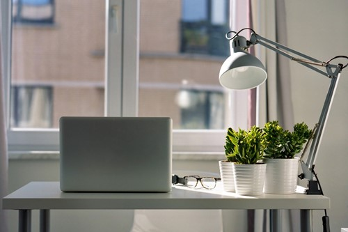 3 Easy Indoor Plants For Your Home Office