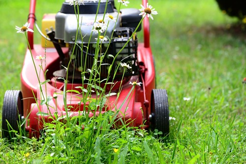 Eco-Friendly Lawn Tips: 4 Ways to Improve Your Lawn Without Harming the Environment