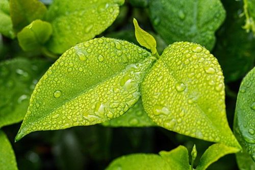 How to Harvest & Use Rain Water