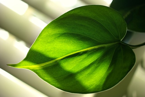 The Best Houseplants for a Low-Light Living Space