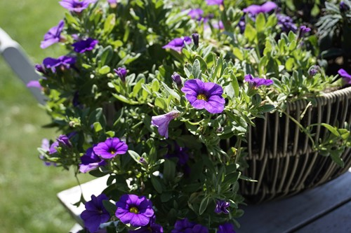 The 5 Best Hanging Plants for Your Front Porch