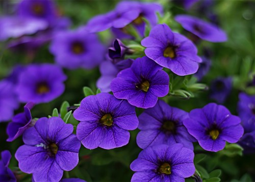 Try These Plants for a Good First Impression