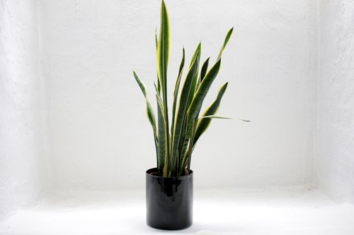 Try These Houseplants to Improve Your Home's Air Quality