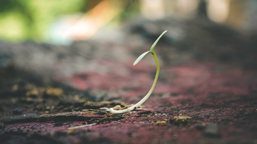 Start Your Own Seeds With These Household Items