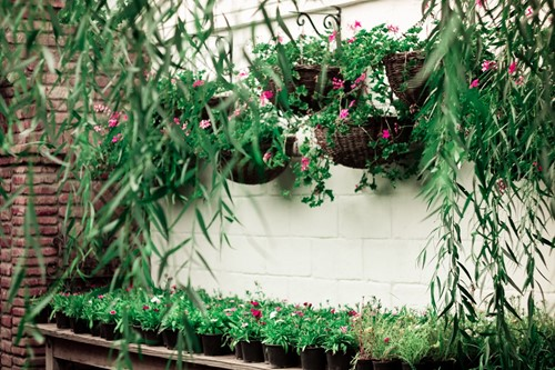 5 Hanging Plant Ideas to Help You Save Space