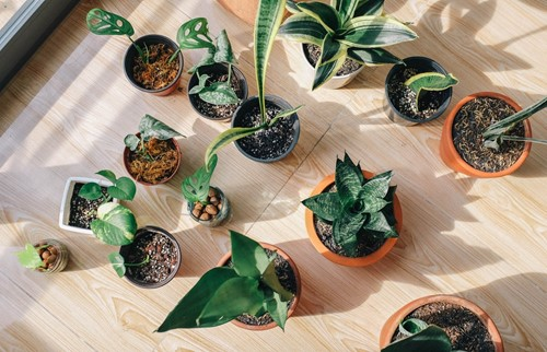 Indoor Gardening Essentials: 4 Things You Should Have
