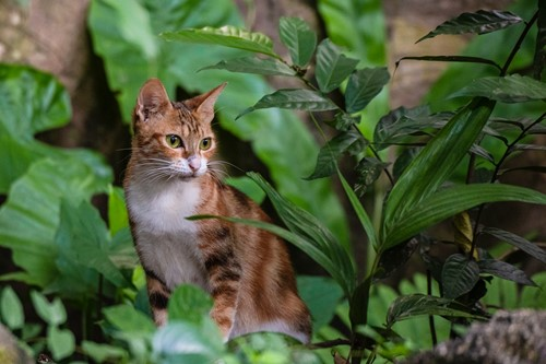 What Are the Best Houseplants for Pet Owners?