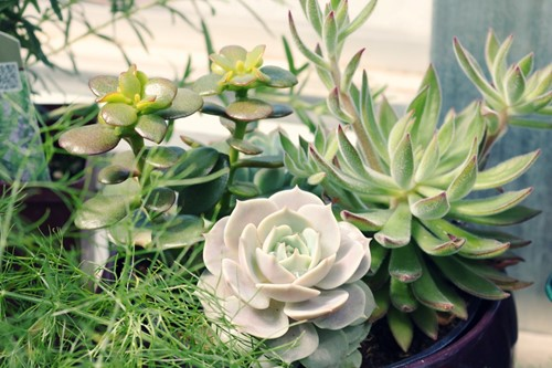 Beginners Guide to Succulent Care