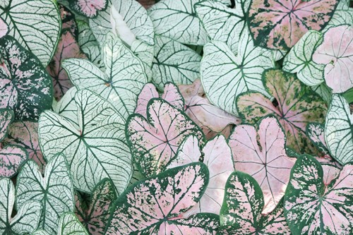 6 Colorful Houseplants to Brighten Any Space