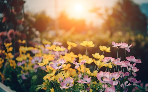 How to Get a Colorful Garden All Year