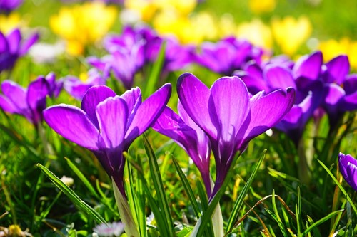 How to Maintain Your Flower Garden