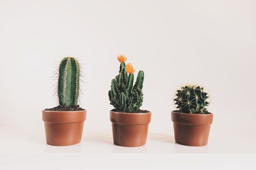 The 5 Best Types of Cactus to Grow as Houseplants