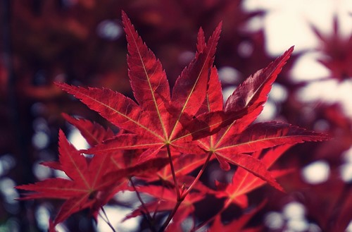4 Colorful Trees for Your Front Yard