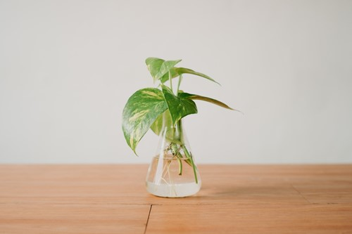 How to Display Plant Propagations
