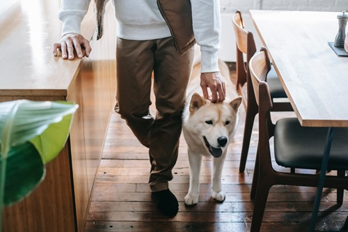 What is the Best Type of Flooring for Pets?