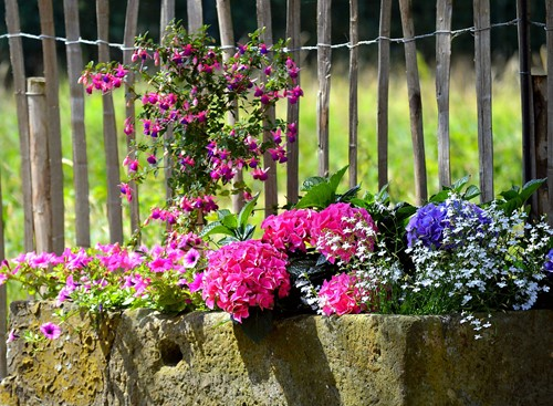 Container Gardens: The Basics