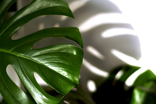 Surviving to Thriving: 5 Tips for Healthy Houseplants