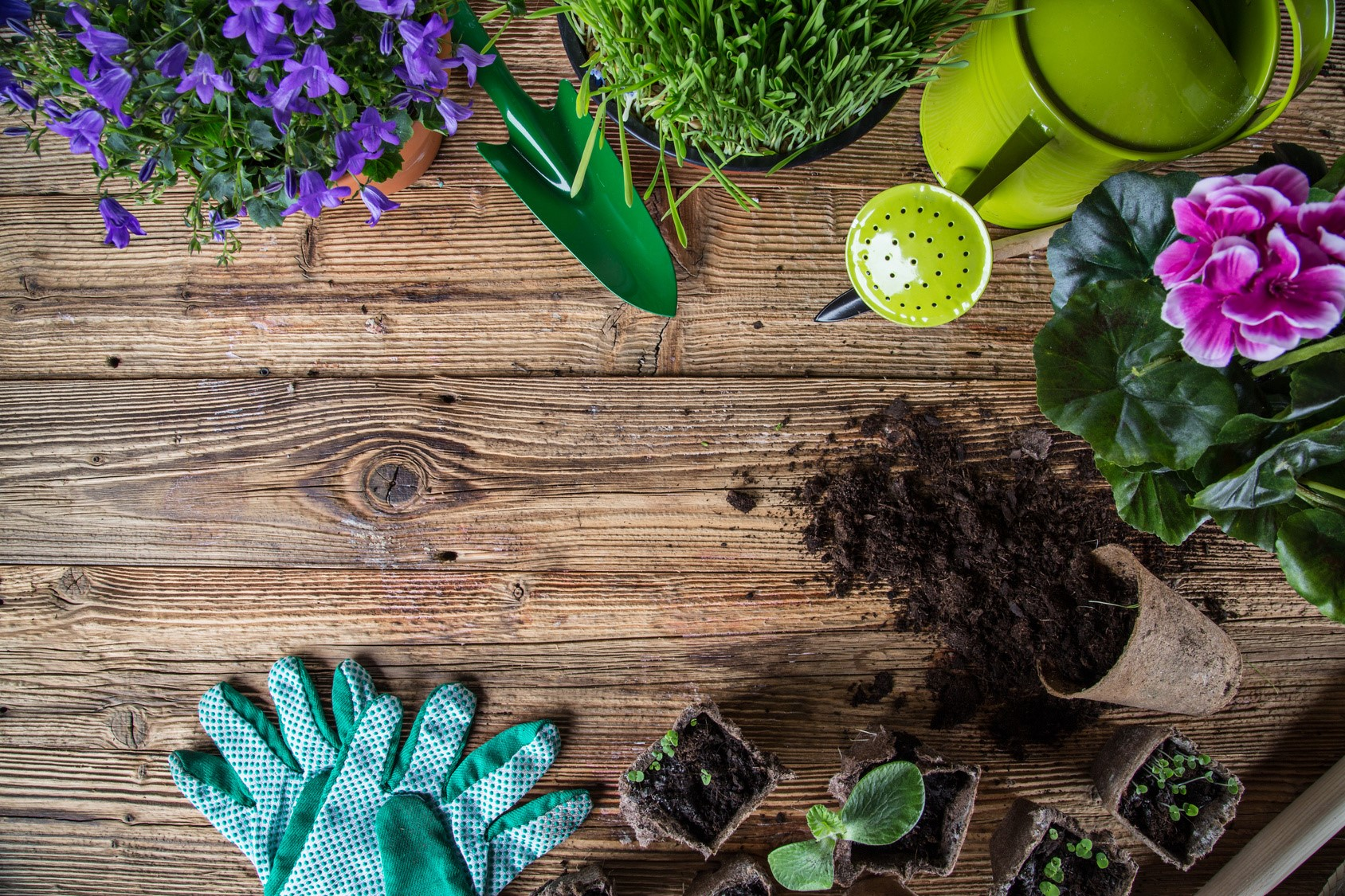 Compost For The Garden | My House Partners blog